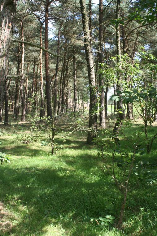 Fruittuin in het begin van het bos